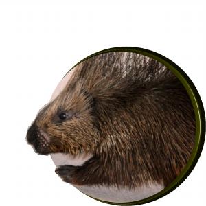Porcupine's
